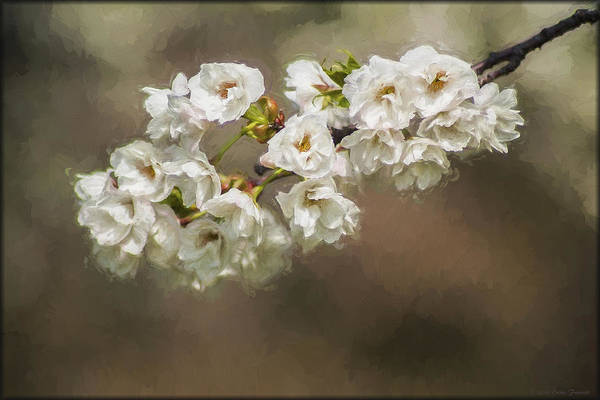 Photograph - Springtime In Dc by Erika Fawcett