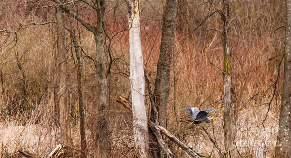 Photograph - Springtime In The Marshes by Mary Lou Chmura