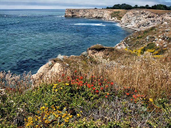 Red Bluff Photograph - Springtime On The California Coast by Kathleen Bishop