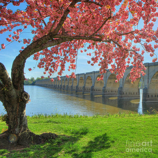 Springtime On The River Art Print