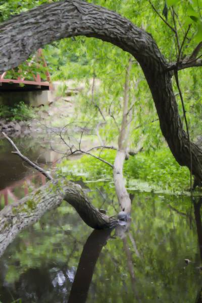Photograph - Springtime Pond With Turtles Abstracted by MM Anderson