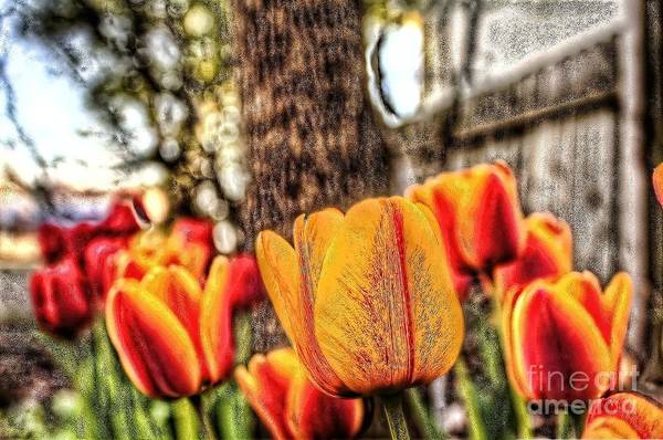 Photograph - Springtime Tulips by Jim Lepard