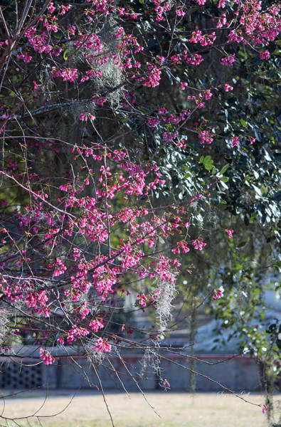 Seasonal Wall Art - Photograph - Springtime View by Suzanne Gaff