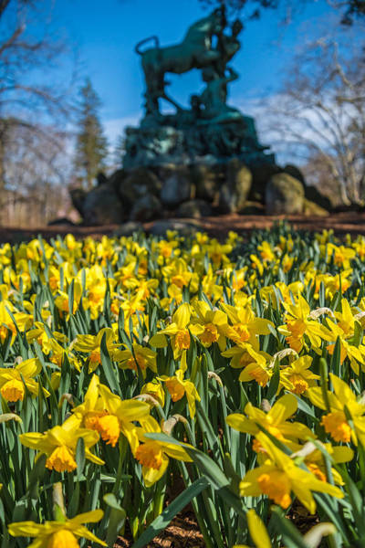 Duke University Photograph - Springy by Kristopher Schoenleber