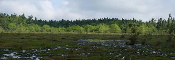 Photograph - Spruce Flats Peat Bog Lan431 by G L Sarti