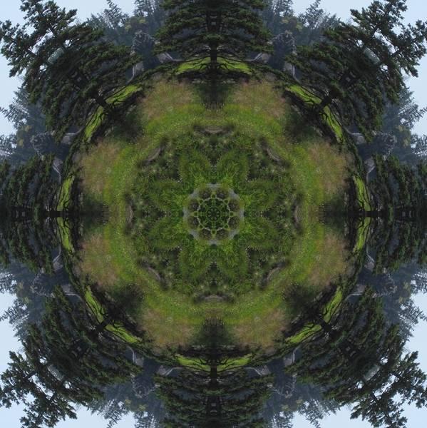 Spruce Tree Twins Art Print
