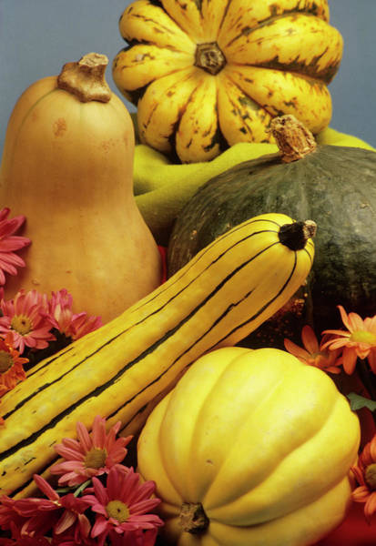 Cucurbitaceae Photograph - Squash And Pumpkin Fruits by Sally Mccrae Kuyper/science Photo Library