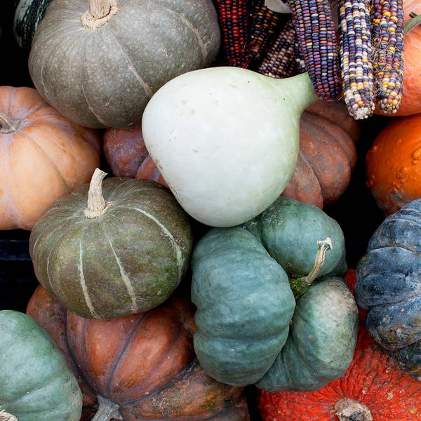 Pumpkins Wall Art - Photograph - Squash Medley by Elizabeth Gray