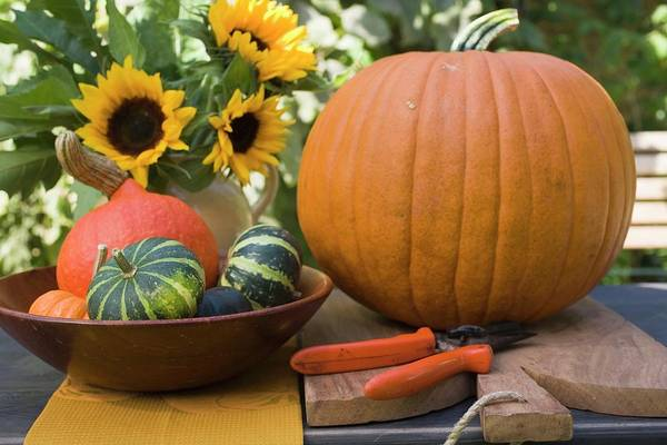 Wall Art - Photograph - Squashes And Pumpkins With Sunflowers On Garden Table by Foodcollection