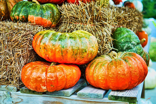 Photograph - Squatty Orange Pumpkins by Paulette B Wright