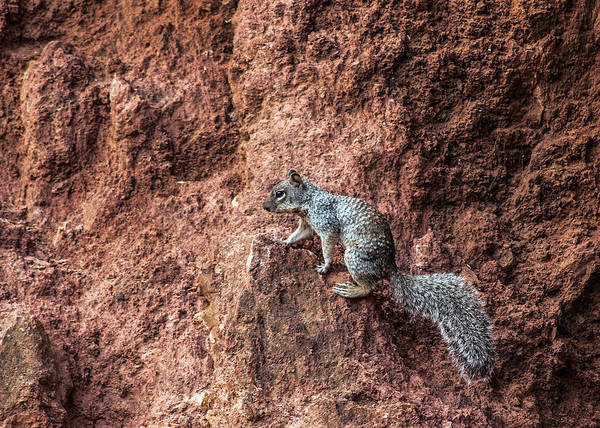 Photograph - Squirrel Adventure by Tam Ryan