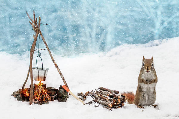 Bucket Photograph - Squirrel And Campfire In The Snow by Nancy Rose