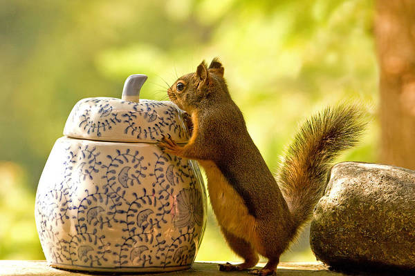 Photograph - Squirrel And Cookie Jar by Peggy Collins
