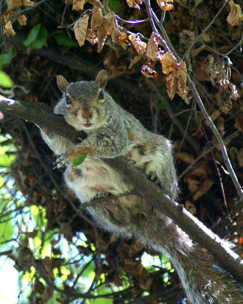 Photograph - Squirrel By Nest by Ben Upham III