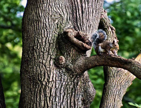 Digital Art - Squirrel Guarding Watering Knot by Chris Flees