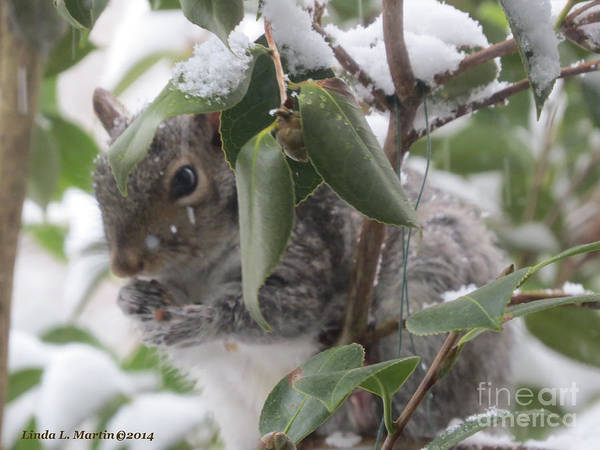 Photograph - Squirrel In Snow 1 by Linda L Martin
