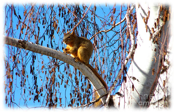 Photograph - Squirrel In Tree by Charles Robinson