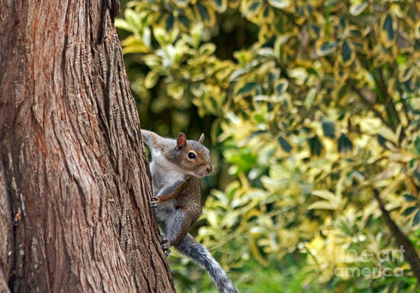 Photograph - Squirrel by Kate Brown