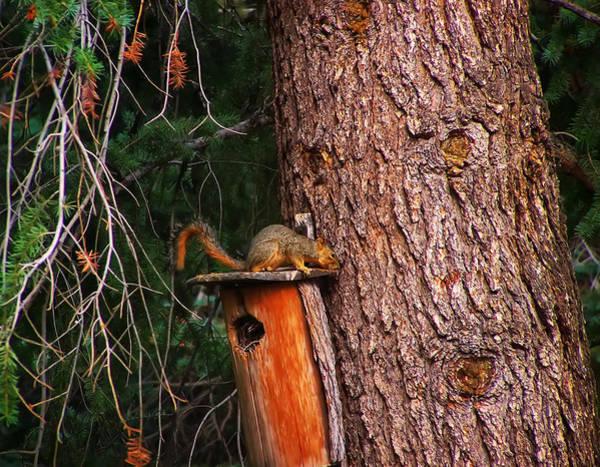 Digital Art - Squirrel On Top Of Birdhouse by Chris Flees