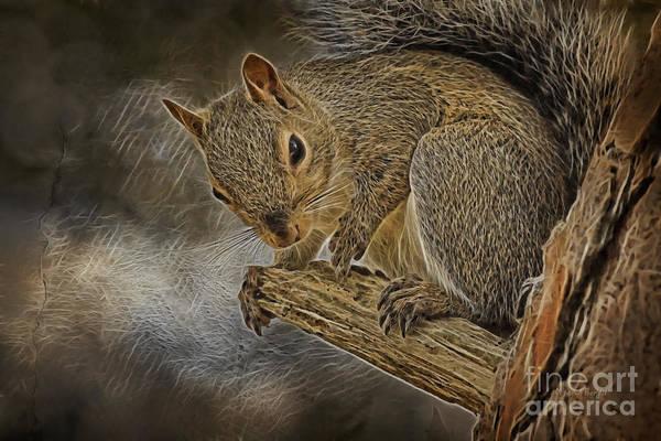 Photograph - Squirrel Pose 1112 by Deborah Benoit