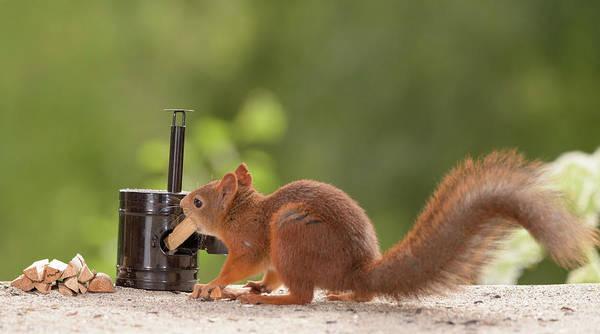 Wall Art - Photograph - Squirrel Putting Firewood In Stove by Geert Weggen