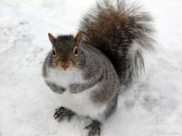 Feed Me Photograph - Squirrel Saying Feed Me Please At Niagara Falls by Rose Santuci-Sofranko