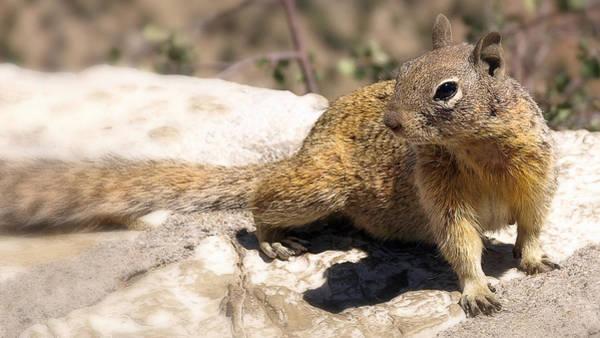 Photograph - Squirrel by Wayne Wood