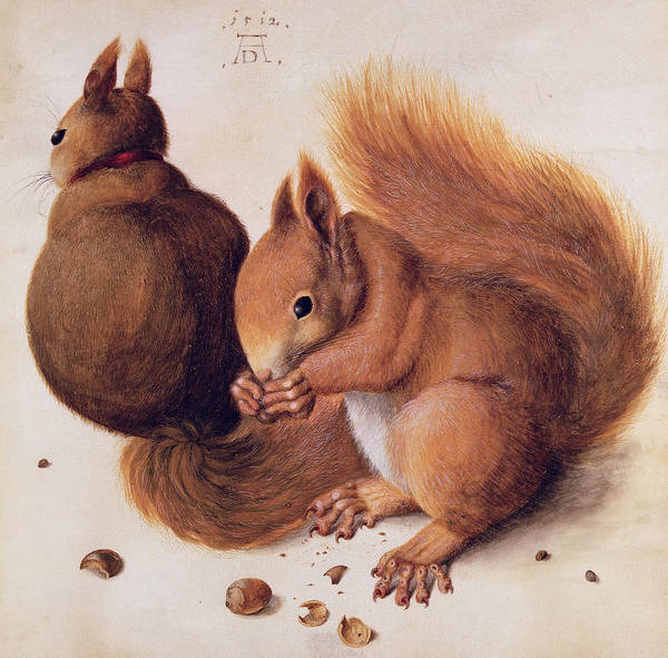 Red Squirrel Wall Art - Painting - Squirrels by Albrecht Duerer