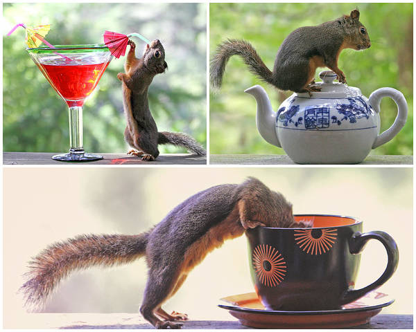 Photograph - Squirrels And Their Drinks Mosaic by Peggy Collins