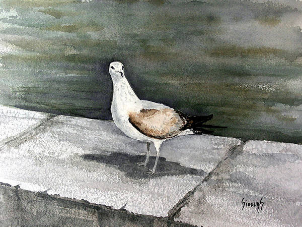 Gull Painting - St Augustine Gull by Sam Sidders