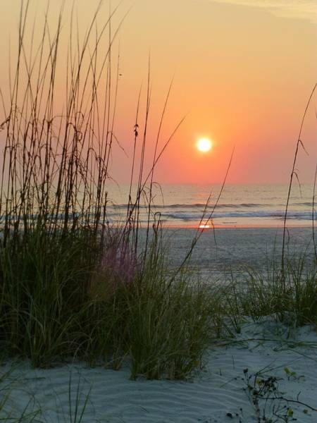 Saint Augustine Photograph - St. Augustine Sea Oats by Phil King