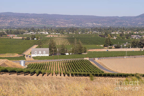 Photograph - St Helena Vineyards Napa California Dsc1739 by Wingsdomain Art and Photography