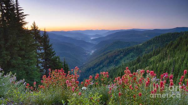 North Idaho Photograph - St. Joe Wildflowers by Idaho Scenic Images Linda Lantzy