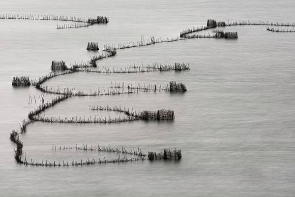 St. Lucia Photograph - St Lucia Traditional Fishing Traps by Tony Camacho/science Photo Library