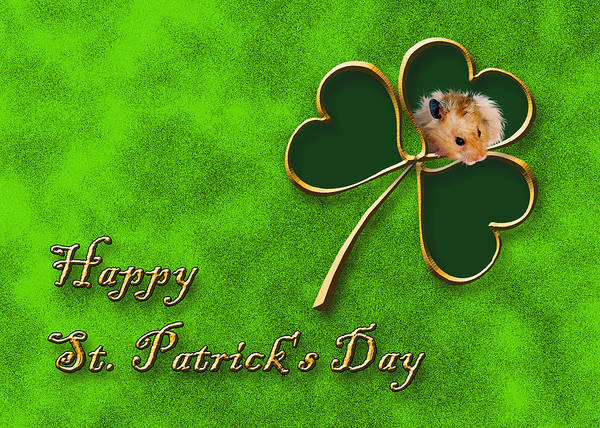 Golden Hamster Photograph - St. Patrick's Day Clover Hamster by Jeanette K