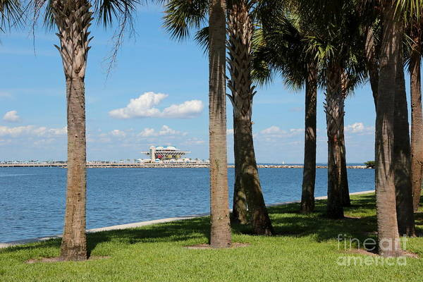 Photograph - St Pete Pier Through Palm Trees by Carol Groenen