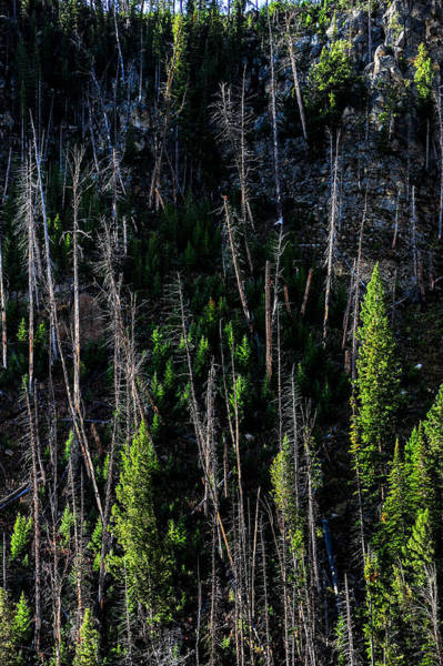 Photograph - Stack Of Trees by Harry Spitz