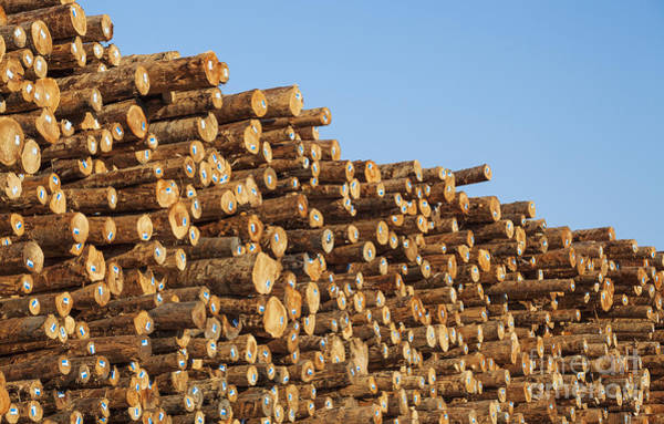 Photograph - Stacks Of Logs by Bryan Mullennix