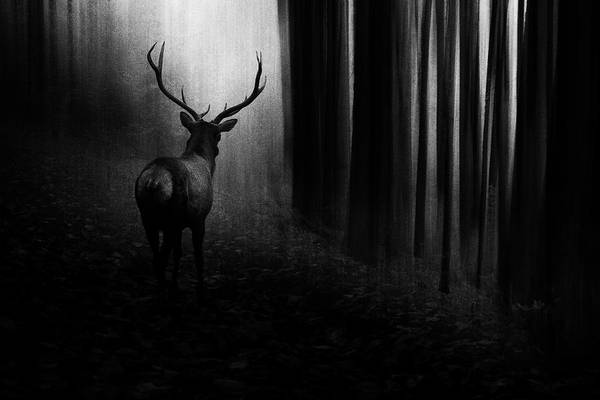 Wall Art - Photograph - Stag by Doris Reindl