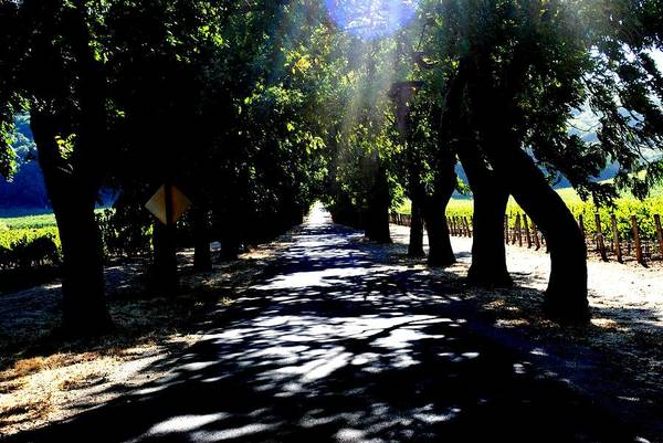 Wall Art - Photograph - Stags Leap Winery Napa Ca by Ron Bartels