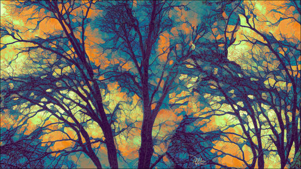 Photograph - Stained Glass Forest No. 6 by Douglas MooreZart