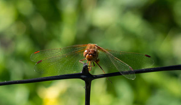 Photograph - On Gossamer Wings by Marilyn Wilson