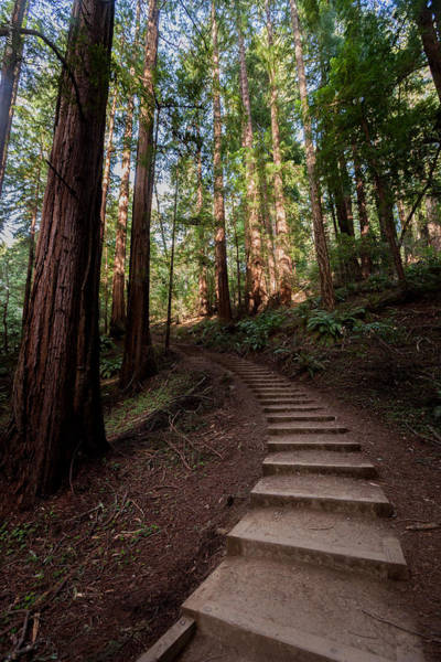 Photograph - Stairs Into The Woods by Alexander Fedin