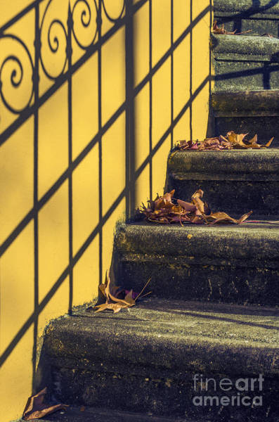 Handrail Photograph - Stairs With Leaves by Carlos Caetano