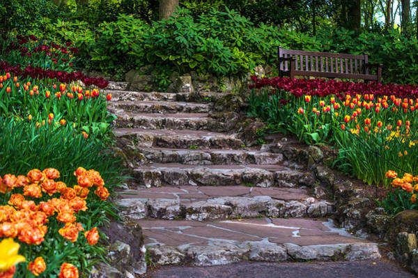 Queens Birthday Photograph - Stairs With Tulips. Keukenhof Garden. Netherlands by Jenny Rainbow