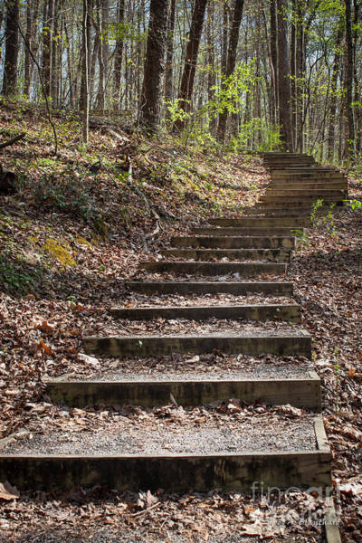 Photograph - Stairway In The Forest by Todd Blanchard