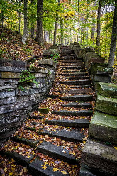 Photograph - Stairway Into The Trees by Ron Pate