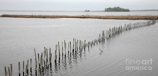 Photograph - Stakes In The Water Form A Barrier To Paddlers At Blackwater Near Cambridge Maryland by William Kuta