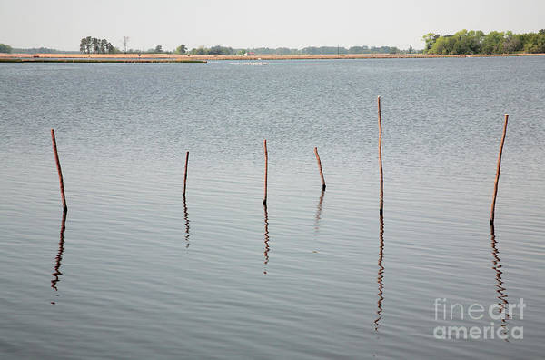 Photograph - Stakes In The Water by William Kuta