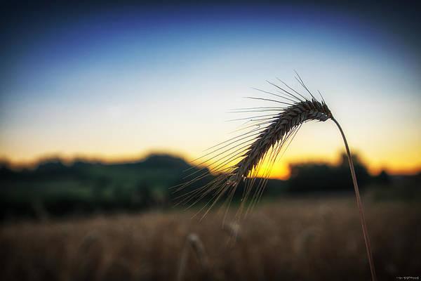 Photograph - Stalk by Ryan Wyckoff